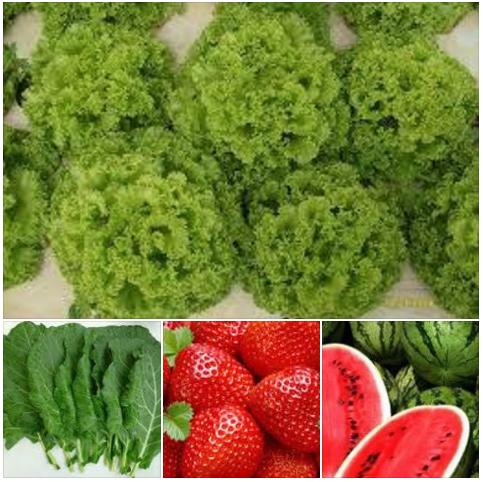 Frutas Hortifruti Nova Horta
