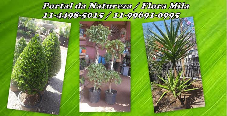 portal-natureza-flora-mila3-min